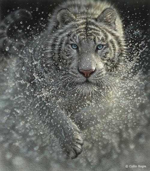 08-White-Tiger-Collin-Bogle-Animal-Wildlife-in-Art-www-designstack-co