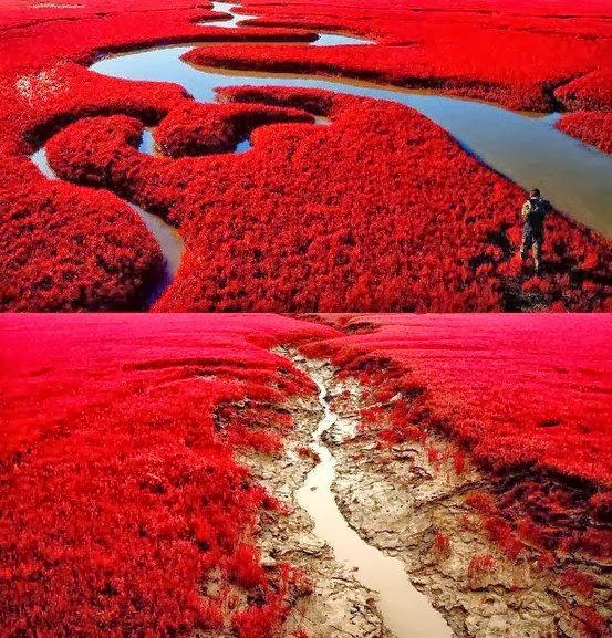 Червеният плаж в Китай