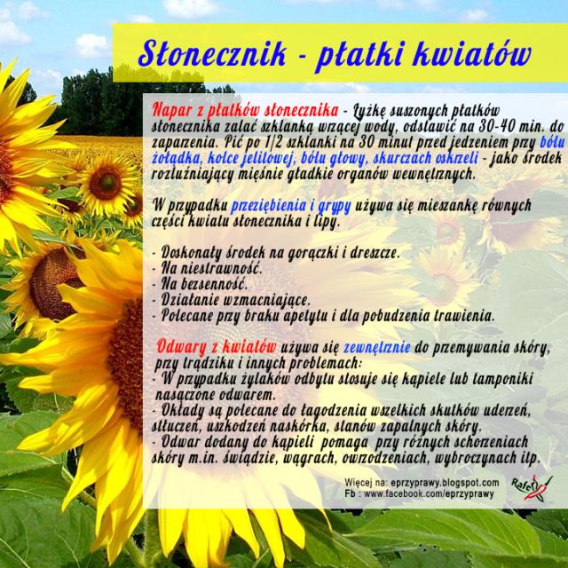 Właściwości płatków kwiatu słonecznika