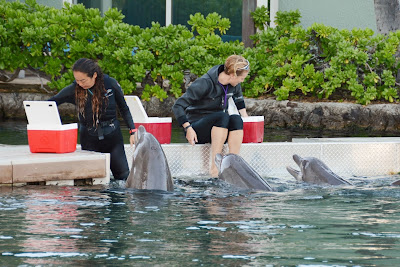 Hawaii Dolphin Encounter