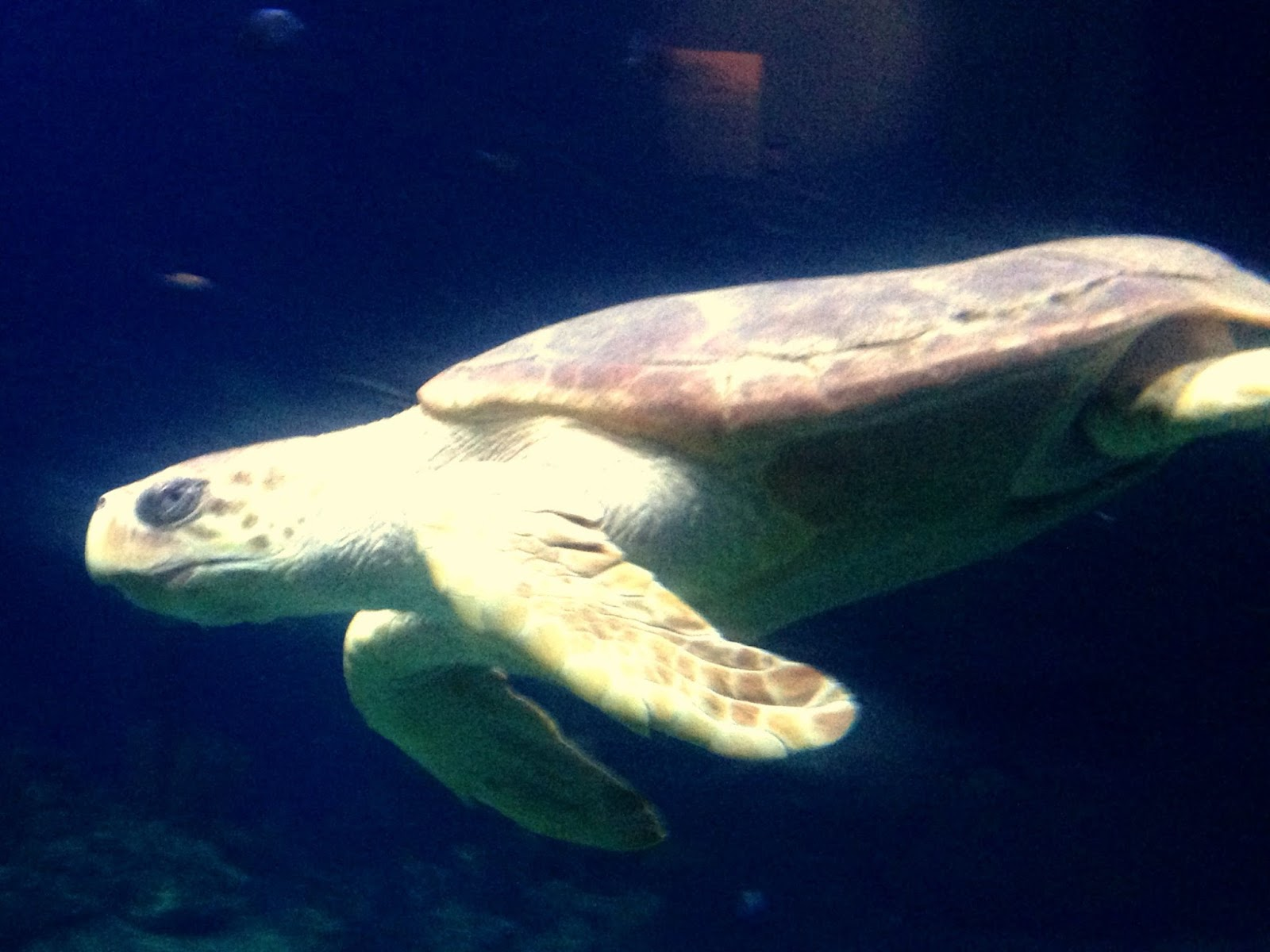 plymouth marine aquarium, turtle, sealife, blogger, parent blogger