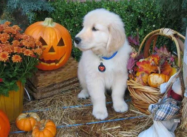Funny halloween animals 7