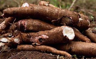 Manfaat Ketela Pohon Untuk Kesehatan