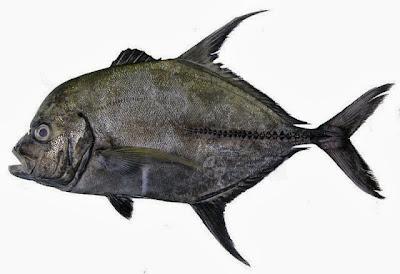 Significado de Sonhar com Peixe