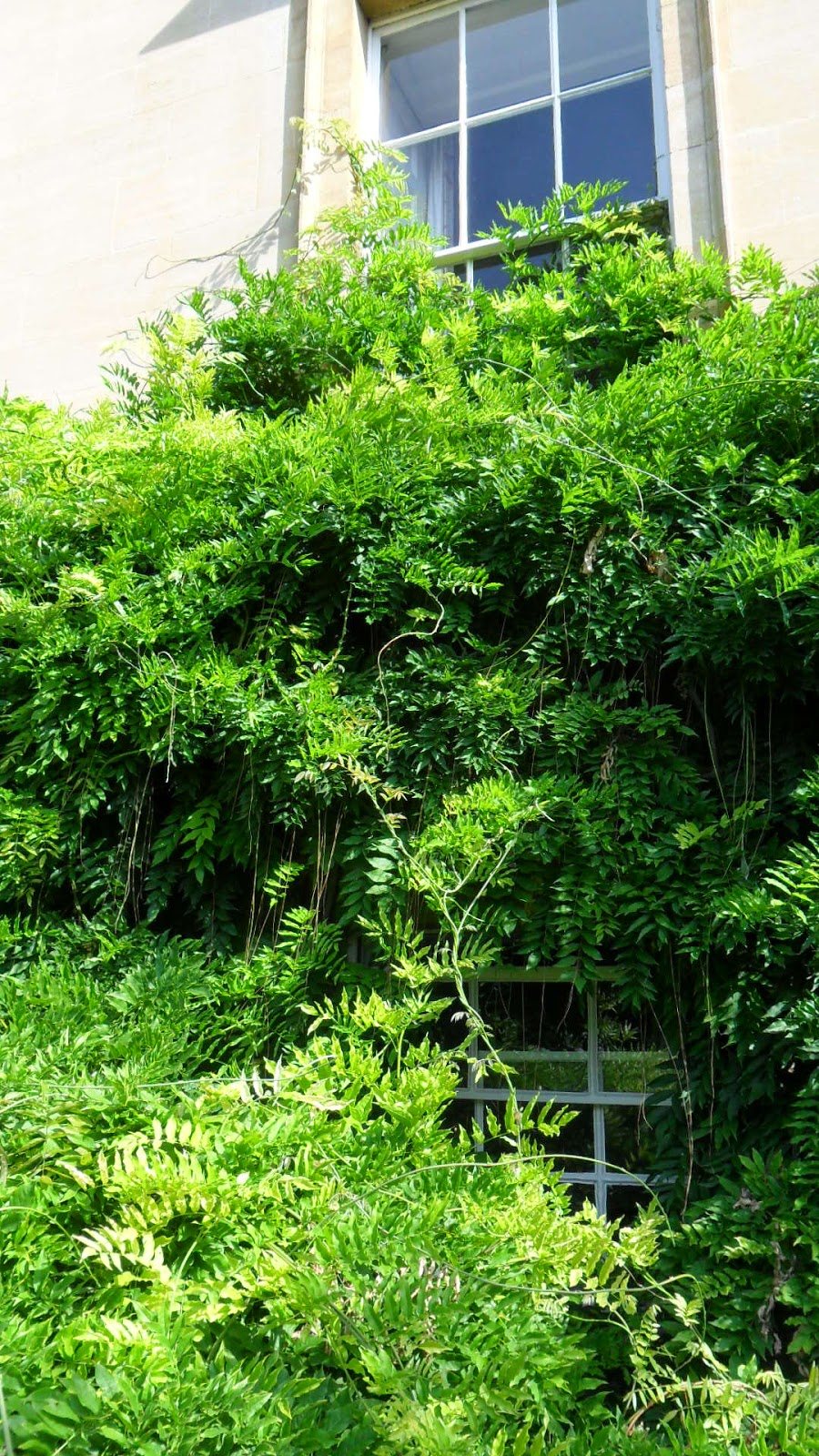 how to cut back wisteria