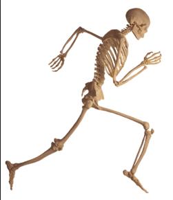 Image result for makanan yang mengandung banyak kalsium