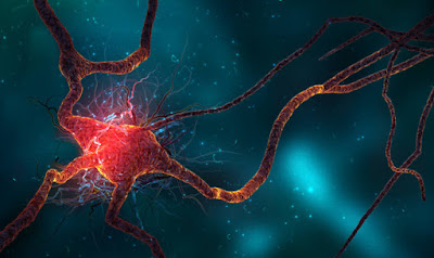 Neurogenézis: így képes az agyad neuronokat termelni