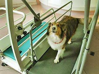 Các chú chó cần được vận động, tập thể dục. Ảnh minh họa.