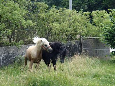 koń,onie, kucyk, transport dla koni, pensjonat dla koni, Kraków - Lipnica Wielka
