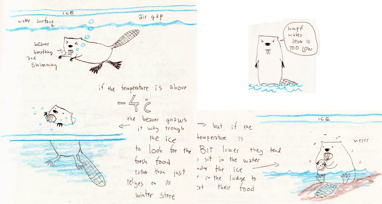 i butterflies obsessed by beavers