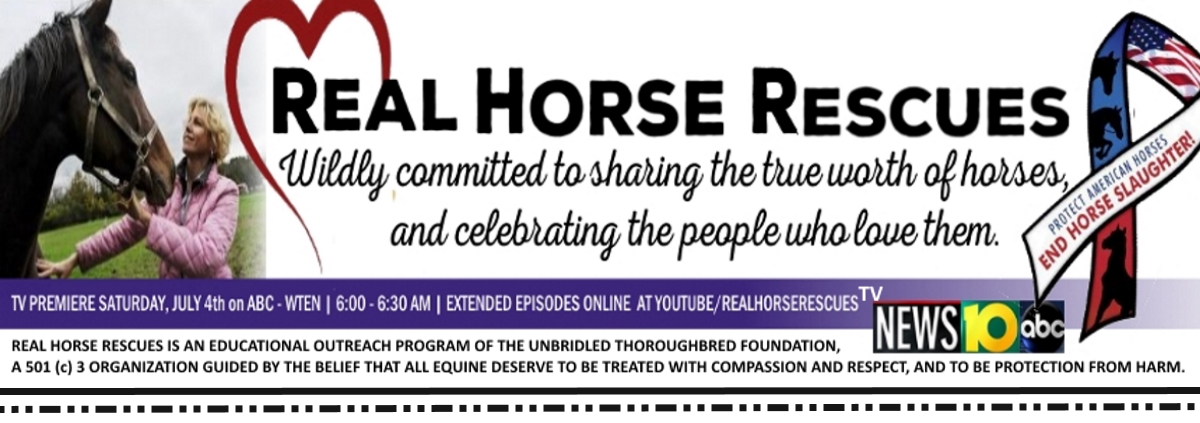 Real Horse Rescues Blog