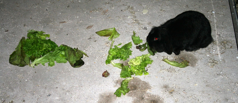 Sassy scoffing salad