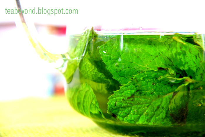 Tea Beyond: Healthy recipes Iced Green tea (Mint, sugar free, dairy ...