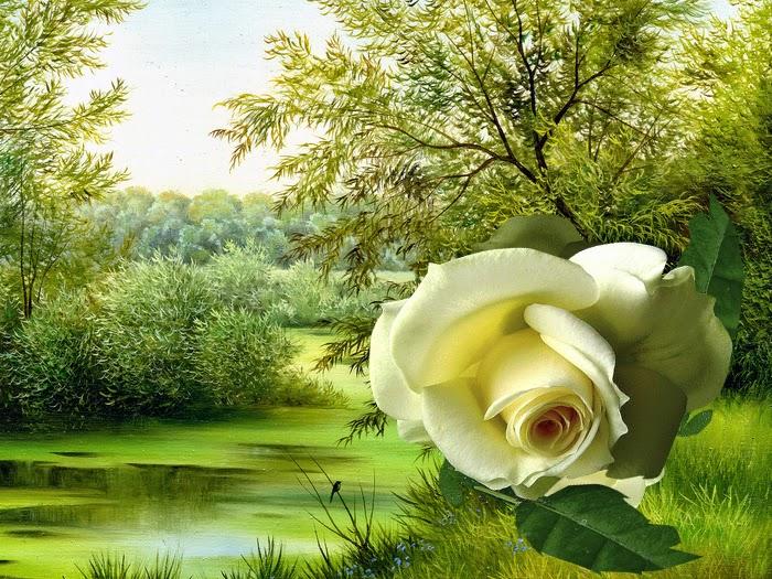 imagenes rosas amarillas animadas Resultados de la
