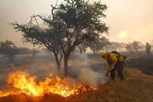 [Imagem: Fogo+em+florestas+faz+Chile+decretar+ale...ntiago.jpg]