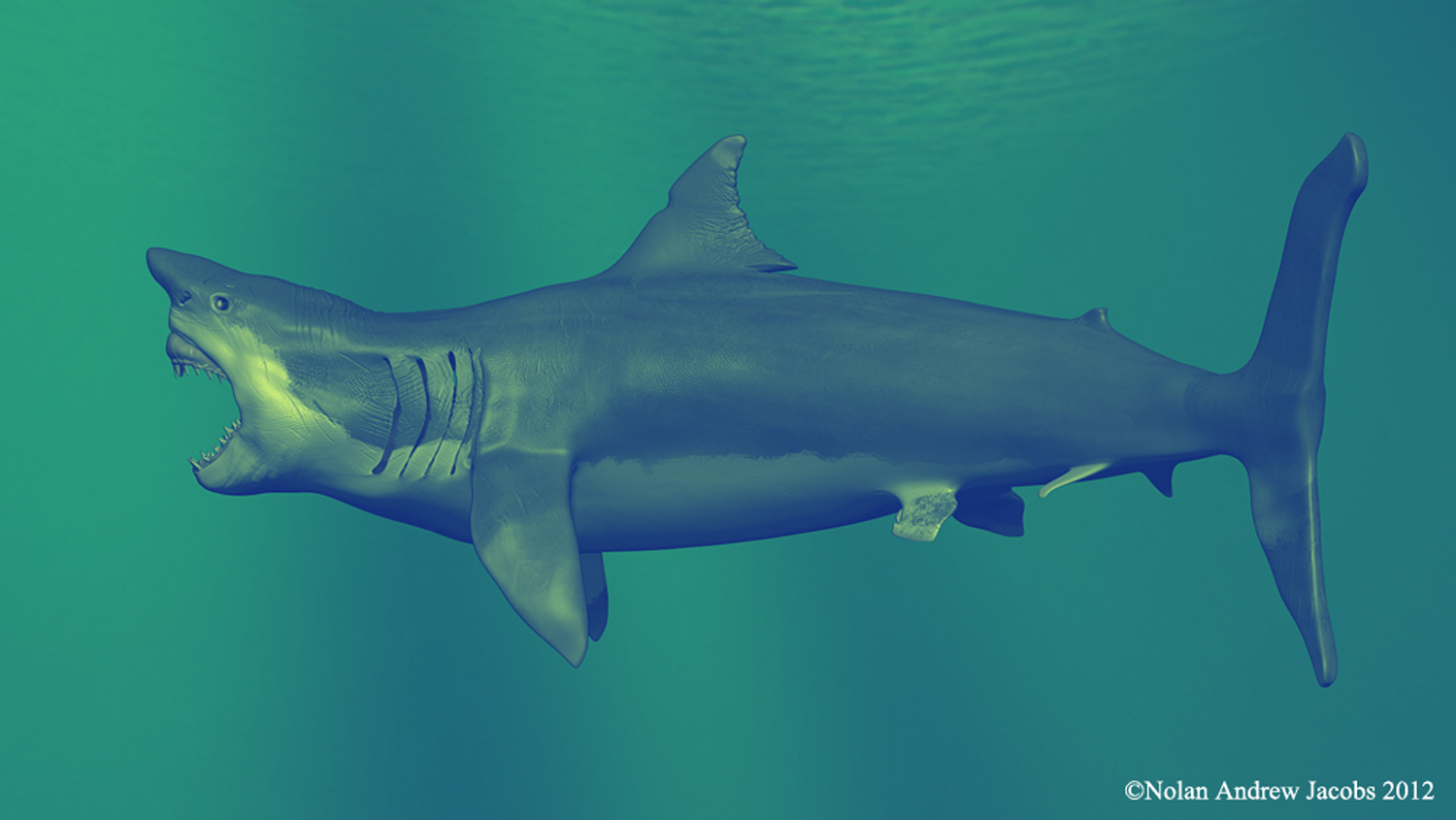 Fossilguycom Megalodon Shark Facts and Information Size