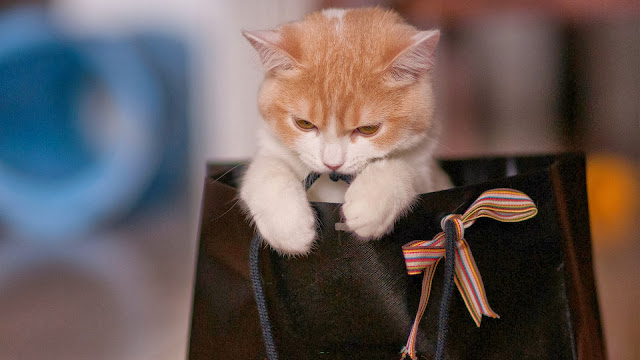 Kitten on Top of Bag