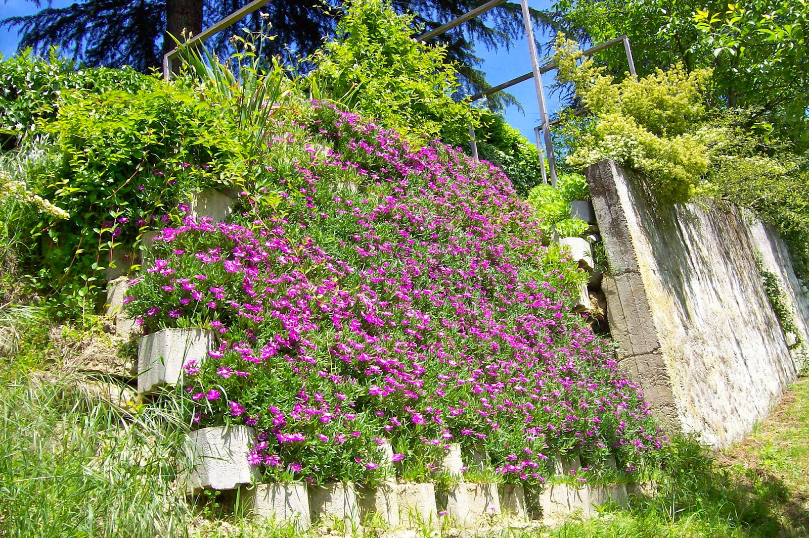 Ultimissime dall 39 orto muro fiorito - Grossi fiori da giardino ...