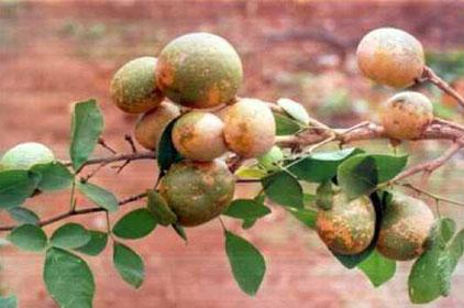 اغرب الفواكهة فى العالم , موقع جزيرة خيال