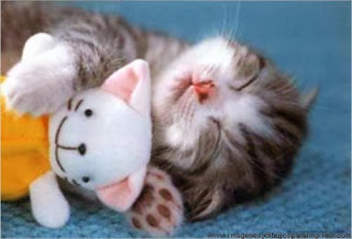 Gato dormido con su peluche