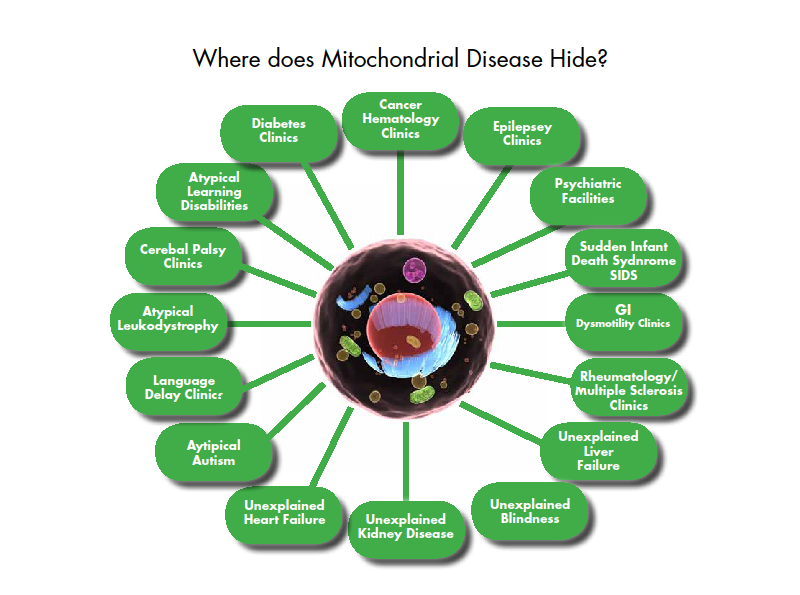 Catechize  Mitochondrial Diseases Their Types  Diagnosis