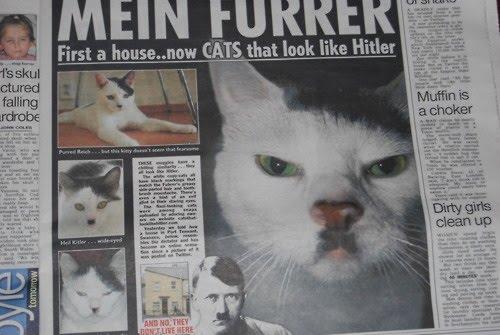 http://1.bp.blogspot.com/-yFw7-GiQ-TQ/TZ8600ZA0xI/AAAAAAAAGhE/JxrDcpuXUVw/s1600/Hitler%2BCat%2B-%2BCats%2BThat%2BLook%2BLike%2BHitler.jpg