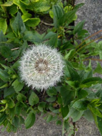 http://utesmile.wordpress.com/2014/05/30/a-beautiful-garden/
