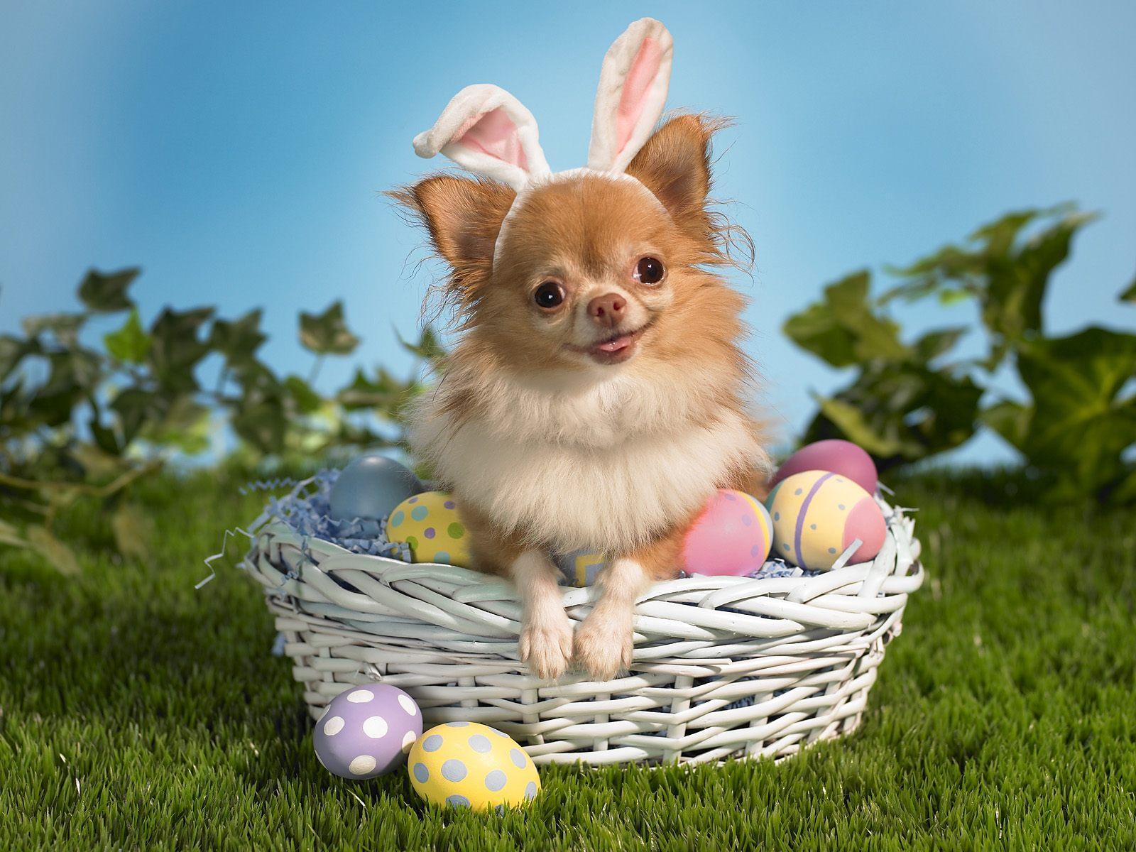 http://1.bp.blogspot.com/-yGXNe-m_jaQ/TYxMs717OeI/AAAAAAAAC4M/FTenFYaprnw/s1600/Bunny-Wishes-Happy-Easter-Wallpaper.jpg