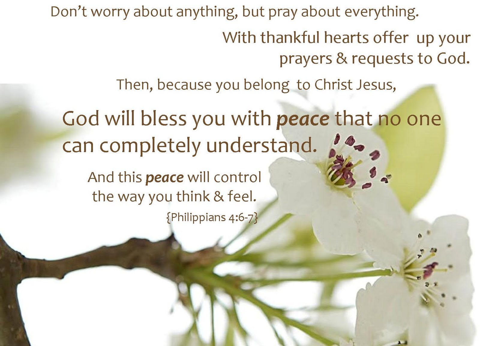 God will bless you with peace