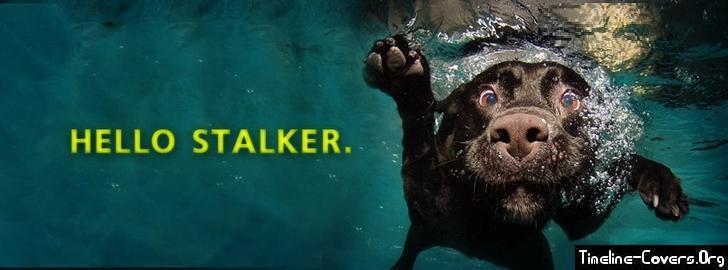 Hello stalker facebook cover
