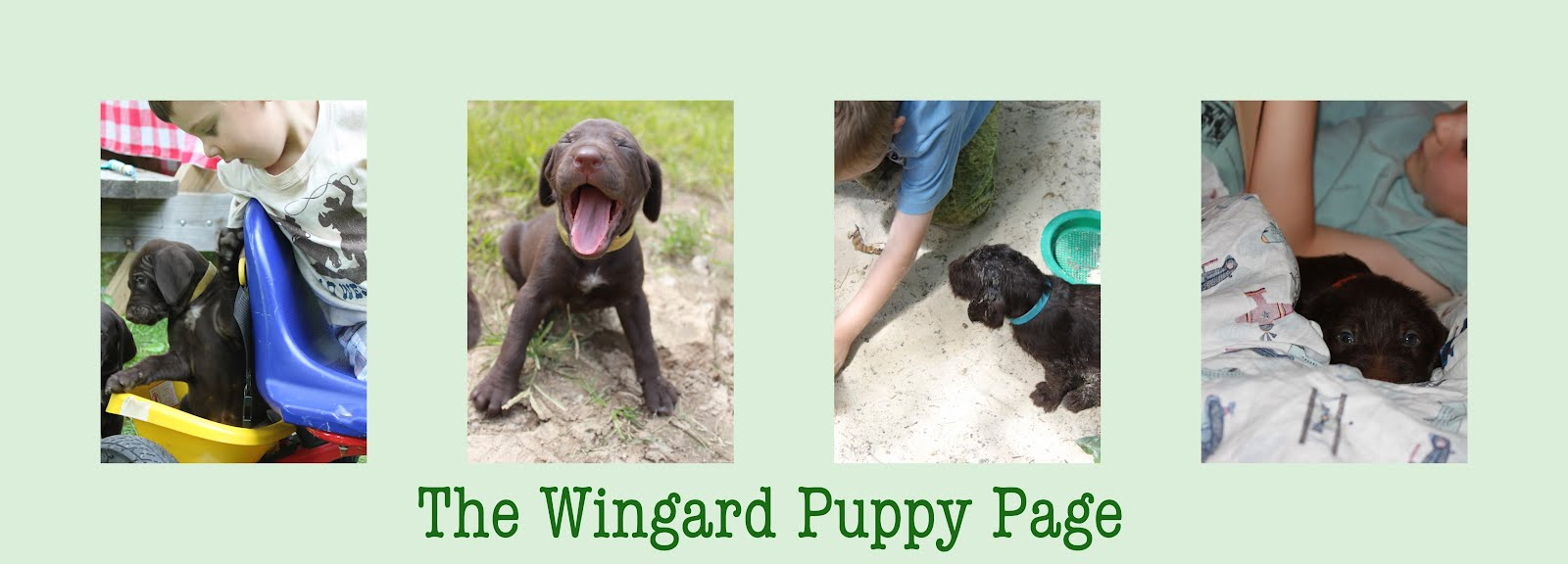 The Wingard Puppy Page