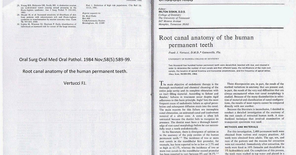 Root canal anatomy of the human permanent teeth
