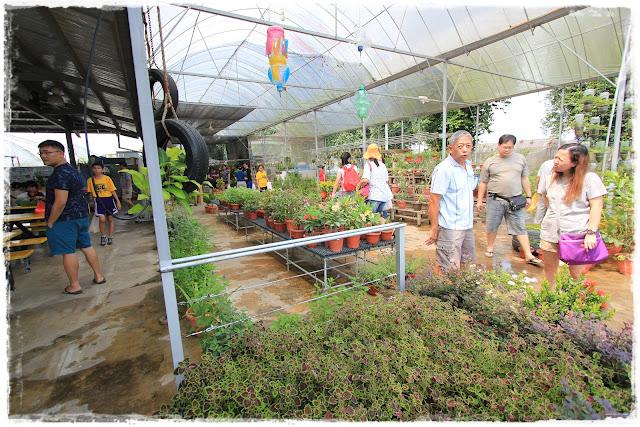 Kok Fah technology farm singapore Mumzilla Veron