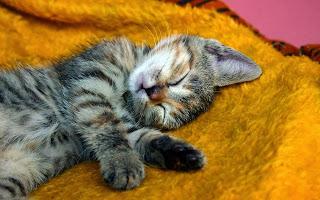 おやすみ。ねここ♪