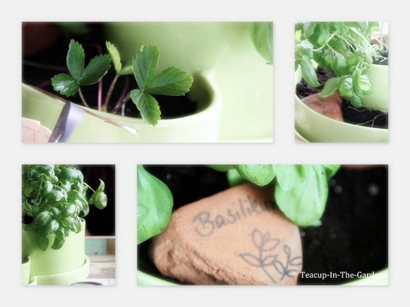 My little small garden teacup in the garden for Tonscherben deko