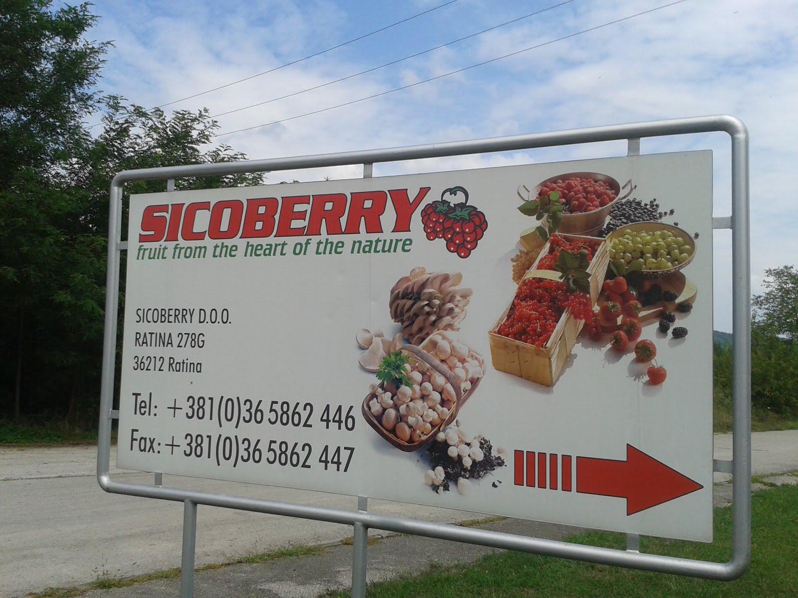 SICOBERRY DOO