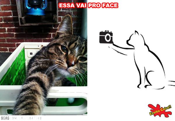 gato, foto, facebook, eeeita coisa