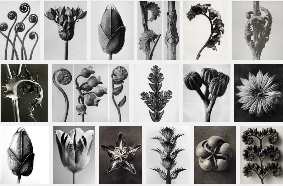 Karl Blossfeldt Botanicals via Meet Me in Philadelphia