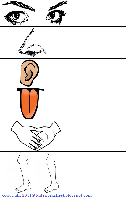 ... Body Parts Worksheets For Kids on the human body parts worksheet html