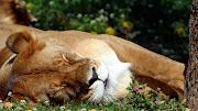 La ternura de los animales, es incomparable. Creo que la mayoría de ustedes . www