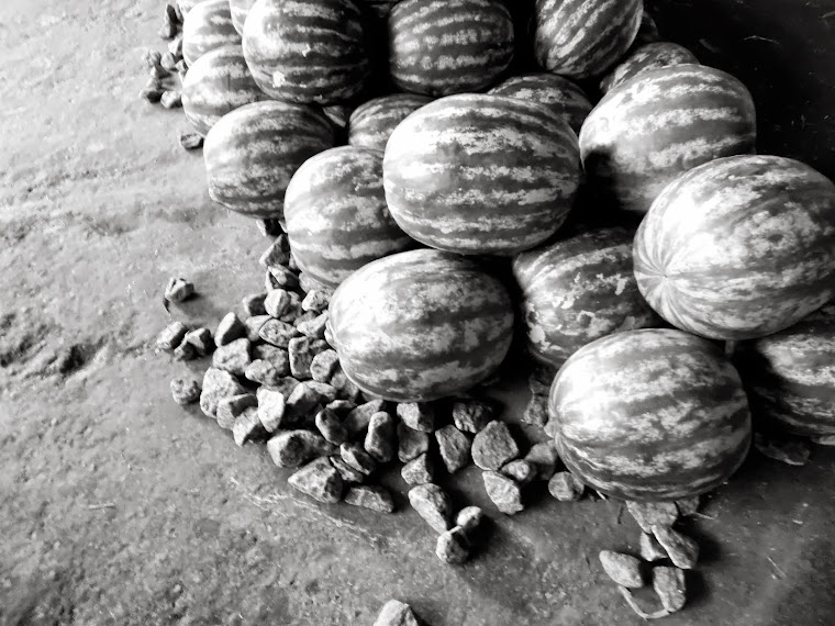 CA  _melancia fruta de preto#3_ sao paulo - SP - BRASIL