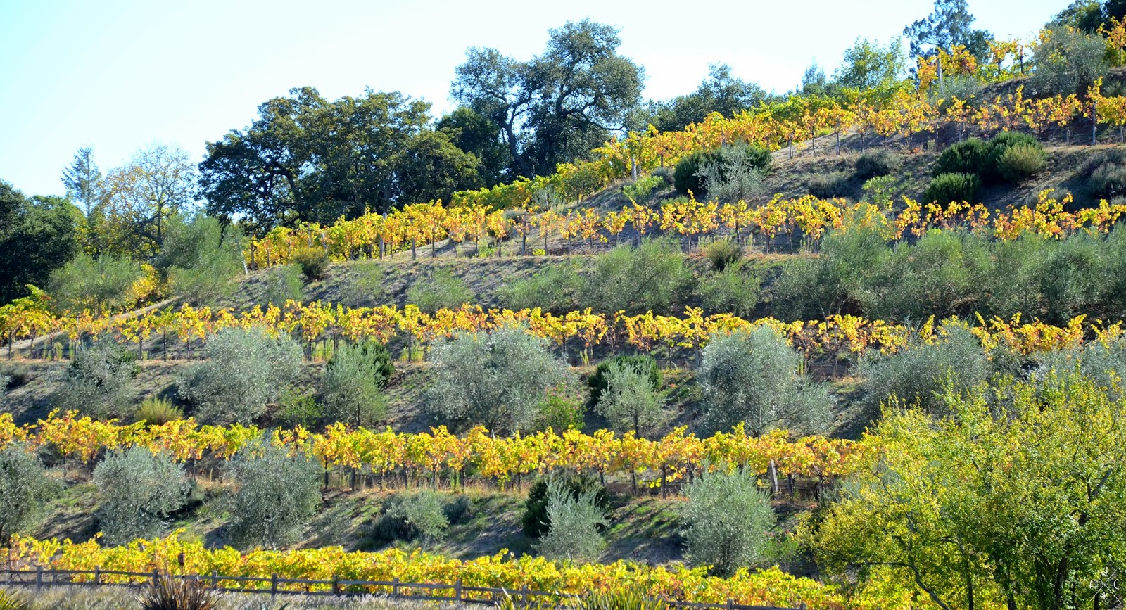 Sonoma Valley, Californie, USA