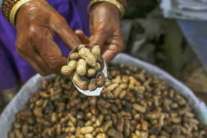 Makan Kacang Saat Hamil Kurangi Risiko Alergi Pada Anak