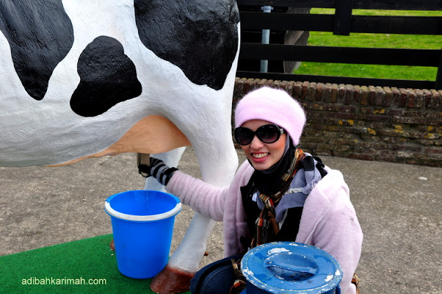After holland and belgium now we have free holiday to guangzhou for premium beautiful top agents how to get cow milk