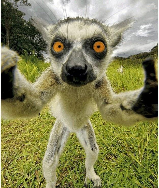 animal-selfies-1