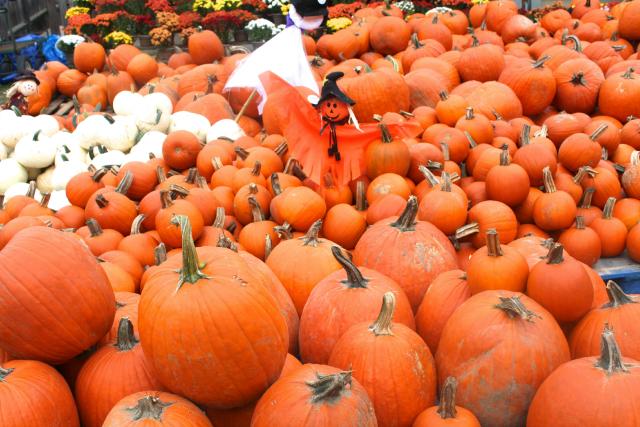 pumpkin patch boston hill farm andover ma