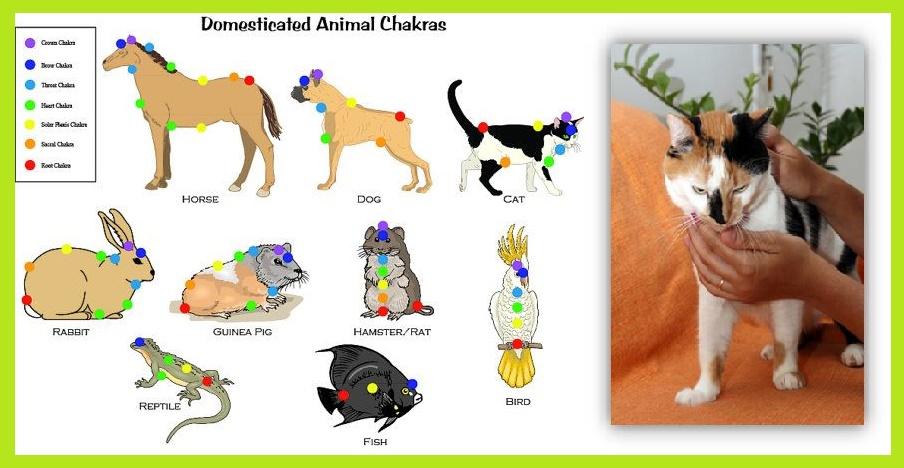Reiki em Animais - Chakras