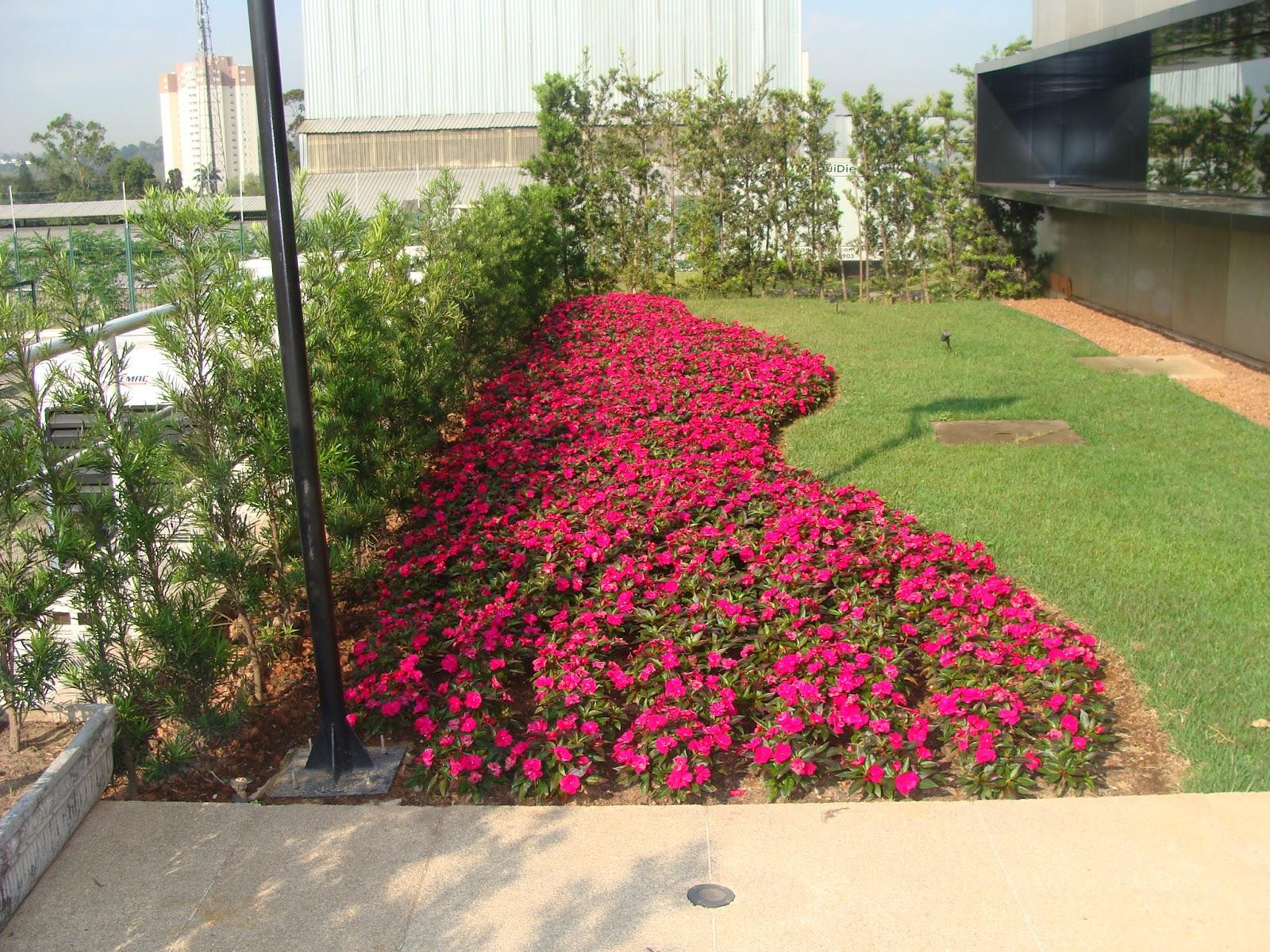 plantas para jardins ornamentais ? Doitri.com