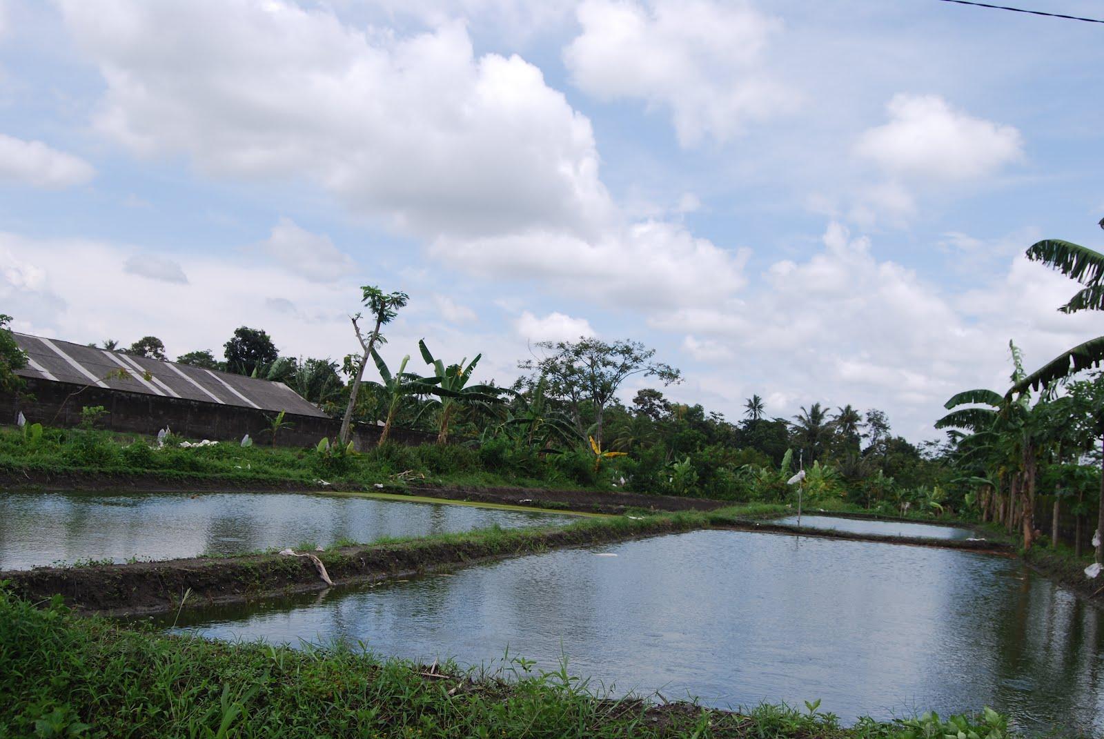Nabila Farm - Pusatnya Jual Benih dan Bibit Ikan Murah