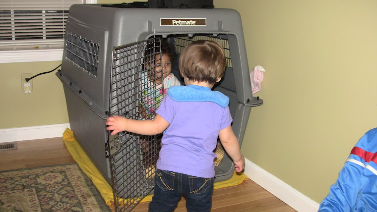 Playing in the Dog Carrier